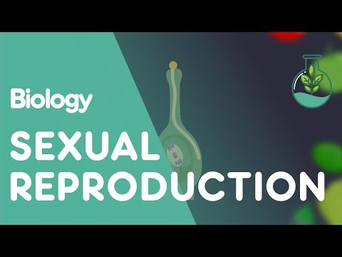 Sexual Reproduction in Plants - Biology for All - FuseSchool - 동영상