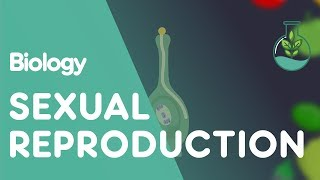Sexual Reproduction in Plants  | Biology for All | FuseSchool