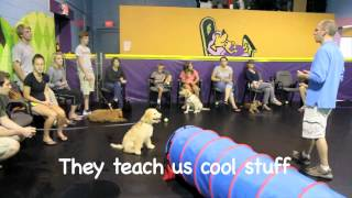 Puppy Pre School Class