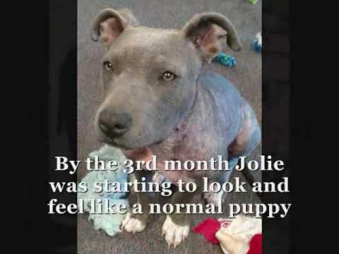 Jolie's Story