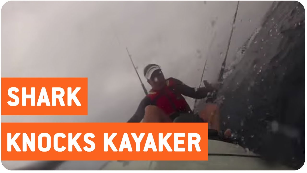 Shark Ruins Kayaking Trip | Kayak Confronts