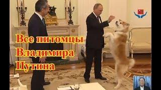 Все питомцы Владимира Путина