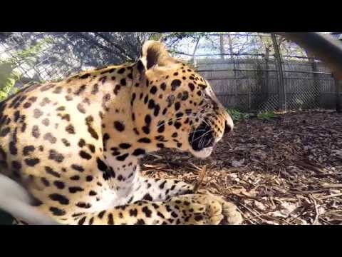 Wild Reserve GoFundMe (HD)