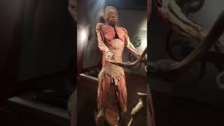 Real body show in Las Vegas 14