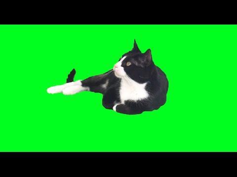 Crying Cats Meme T Shirt Crying Cats Sad Cats Cats Meme Cats