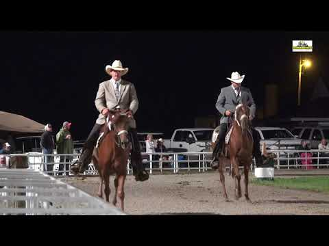 Ava 2018 WGC Open5+ Performance Missouri Fox Trotter