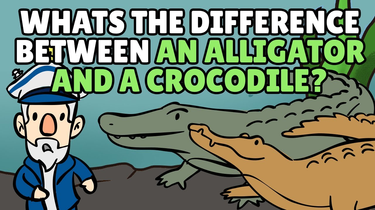 What S The Difference Between An Alligator And A Crocodile Best Learning Videos For Kids
