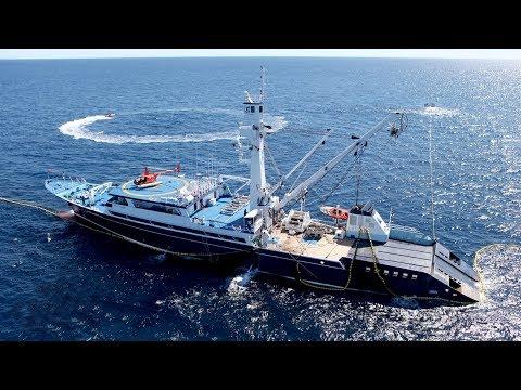 Operación Pesca De Atún Aleta Amarilla En El Océano Pacífico Con Helicóptero Y Lanchas Rápidas