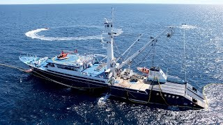 Yellowfin tuna fishing operation in the Pacific Ocean with helicopter and speedboats