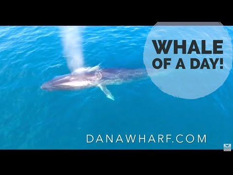 Whale of a summer day in Dana Point