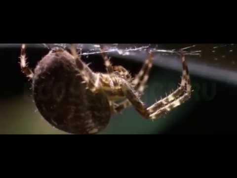 Пауки в квартире, что делает паук в квартире