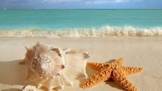 Why Does A Seashell Sound Like The Ocean?
