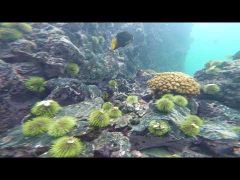 Hawaii: curious yellow fish lips