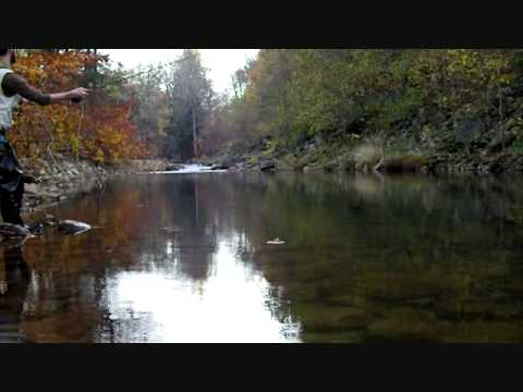 Fly fishing the elk in wv trout rainbow trout dry flies for Elk river wv trout fishing