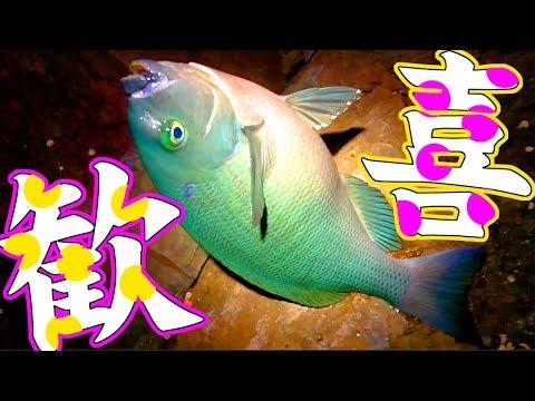 真冬の夜の磯で美味しい魚を五目釣り