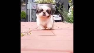 funny dog soo cute dog will try to help baby