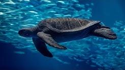 Having a turtley good time watching the Open Sea Cam   Monterey Bay Aquarium Live Open Sea Cam