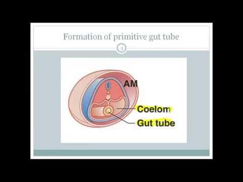 Development of GI tract