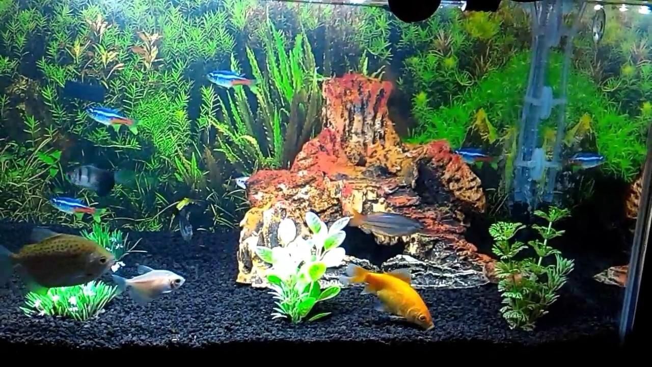 Ganti Aquarium Dengan Pasir Malang Youtube Pasir malang untuk akuarium