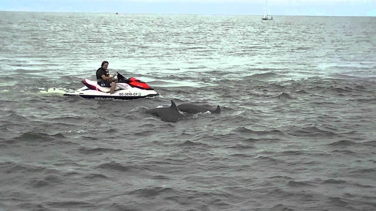 Sea Thunder Dolphin Cruise - YouTube