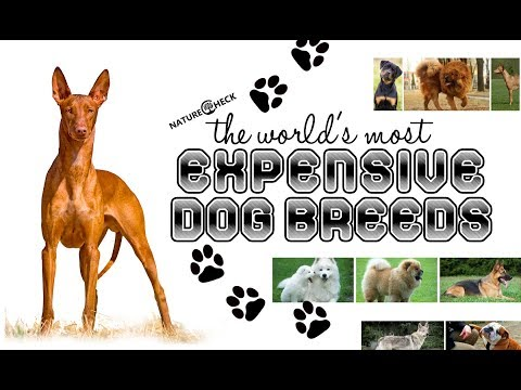 Most expensive dog breeds of the world