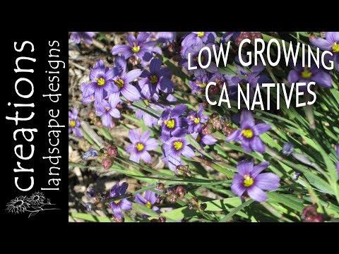 Top 3 Low Growing California Native Plants