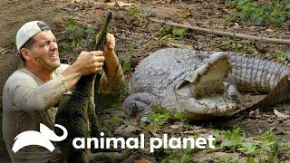 3 Espeluznantes encuentros con cocodrilos salvajes   Wild Frank en India   Animal Planet