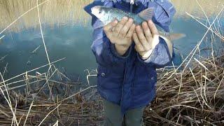 Рыбалка на поплавочную удочку в АПРЕЛЕ Дима обловил всех