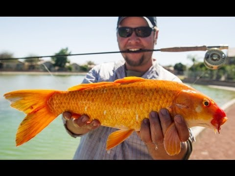 Field & Stream's Hook Shots, Season 6, Ep 1: Arizona Desert Madness