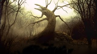 The Worlds Most Haunted Forests