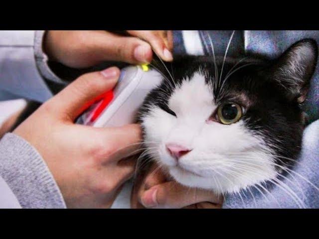 宠物猫为救流浪猫,乖乖被医生抽了一管血,令人感动又心疼...