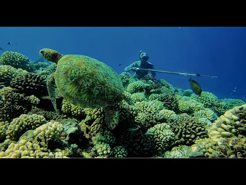 Spearfishing Tahiti 2020_Life Is Better Underwater