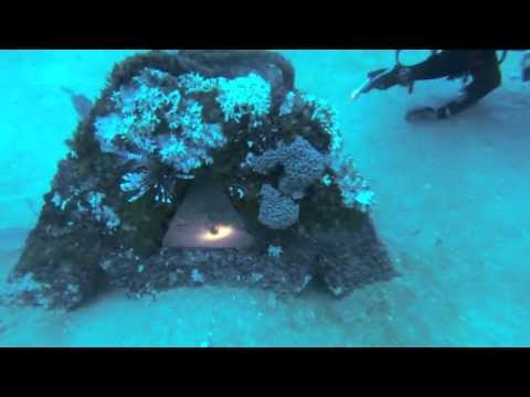 Pensacola Lionfish Being Eaten By Snapper And Triggerfish On Pyramids 10-19-2013