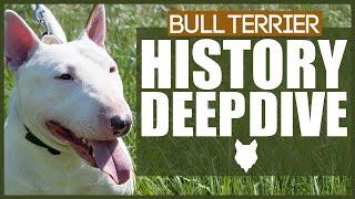 BULL TERRIER HISTORY DEEPDIVE