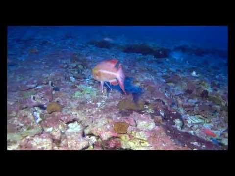 Hawaii marine life at Kure Atoll