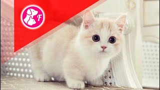 Funny Animals And Cute Pets Compilation #27 - Funny Animals