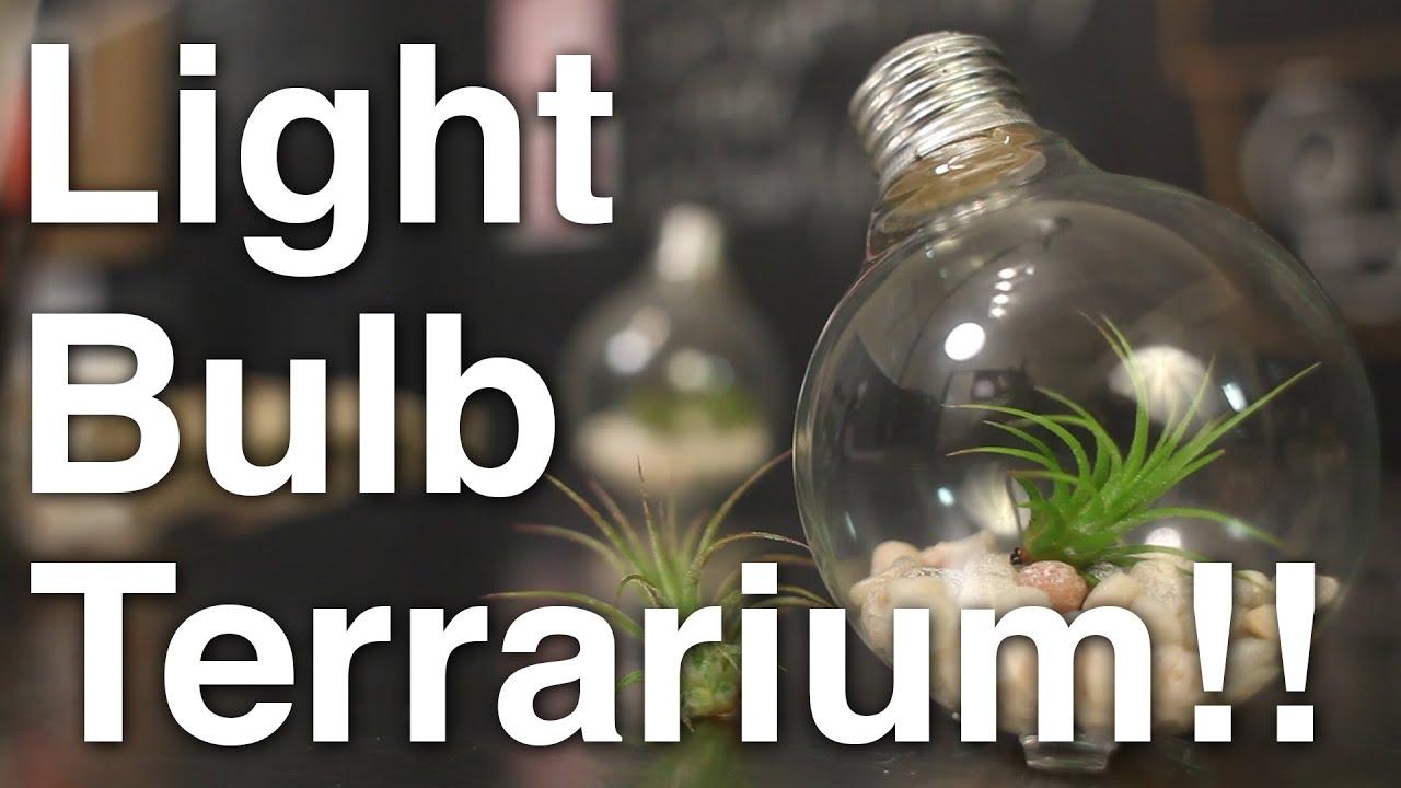 & DIY Light Bulb Air Plant Terrarium!! - YouTube azcodes.com