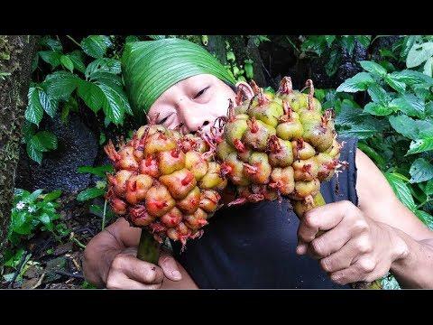 Memetik dan makan buah / biji Honje.