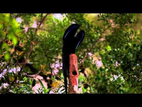 Birds of Paradise - Dennos Museum Center