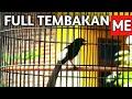 Tembakan Isian Murai Yang Paling Dicari Buat Lomba  Mp3 - Mp4 Download