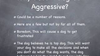 Stop Aggressive Dog Behavior With Simple Dog Training