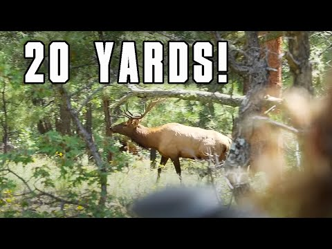172 ELK BUGLES In ONE DAY!! | HUNTING PUBLIC LAND DIY | POINT BLANK BULL