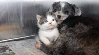 サウスカロライナ州の動物管理施設に、「土手の方から犬の鳴き声がする...