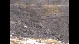 Ancient footage of hounds and terriers hunting a disused quarry htt...