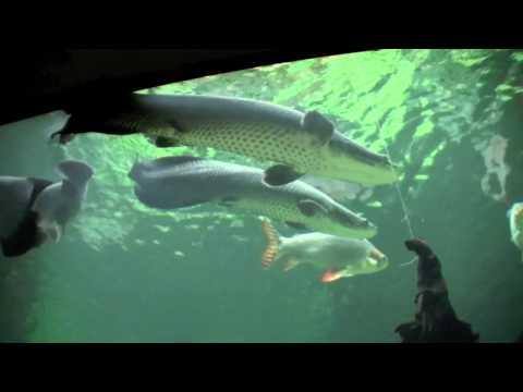 Smithsonian National Zoo - Amazonia