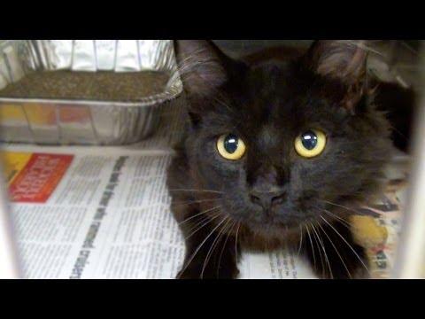 Spay Neuter Adopt! -      Cat Vlog #1