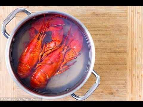 Celebrities ask for ban on crustaceans being boiled