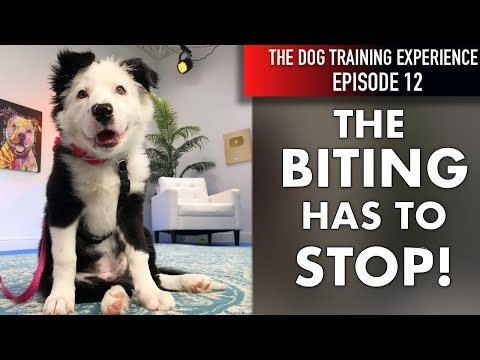 How I'm Teaching My Puppy To Stop Biting and Start Listening!