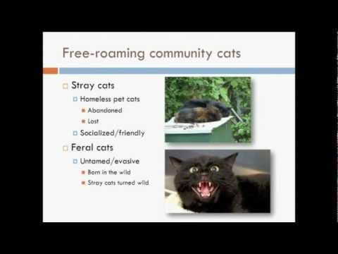 Levy Webcast: Shelter Crowd Control - Keeping Community Cats Out of Shelters