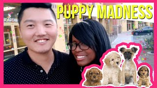 Vlog | Jenny & Jae Go to the Puppy Store | AMBW Married Couple(, 2015-12-01T05:52:12.000Z)
